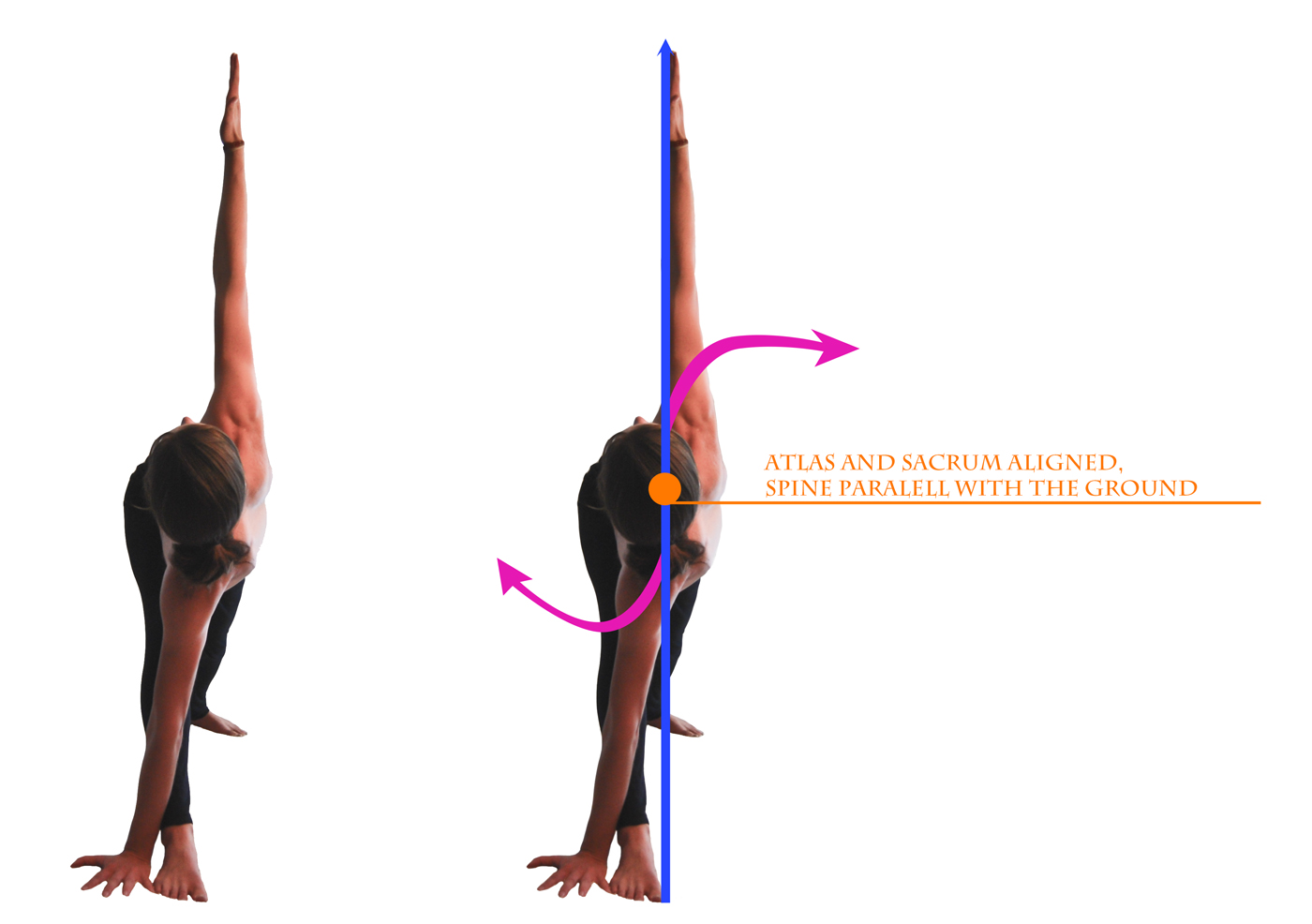 parivritta trikonasana viewed from the front